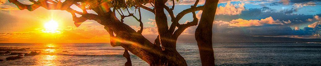 太平洋/オセアニアビーチのベストシーズン